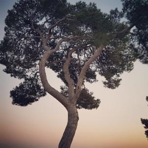 Provence Hiver Jolie lumière Petits bonheurs Small blessings Crépuscule