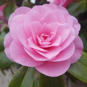 Aujourd'hui je m'aime - Les fleurs du printemps 2017 - Bretagne