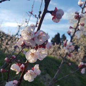 Défi Listes Défis du Jeudi Les petits plaisirs du printemps