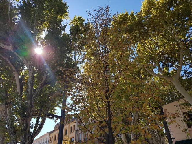 Avignon Automne Gratitude