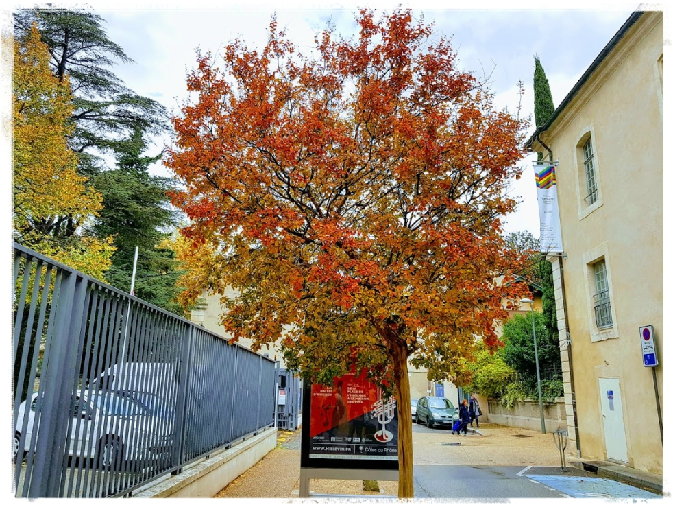 Avignon Provence Automne Fall Enjoy the simple pleasures