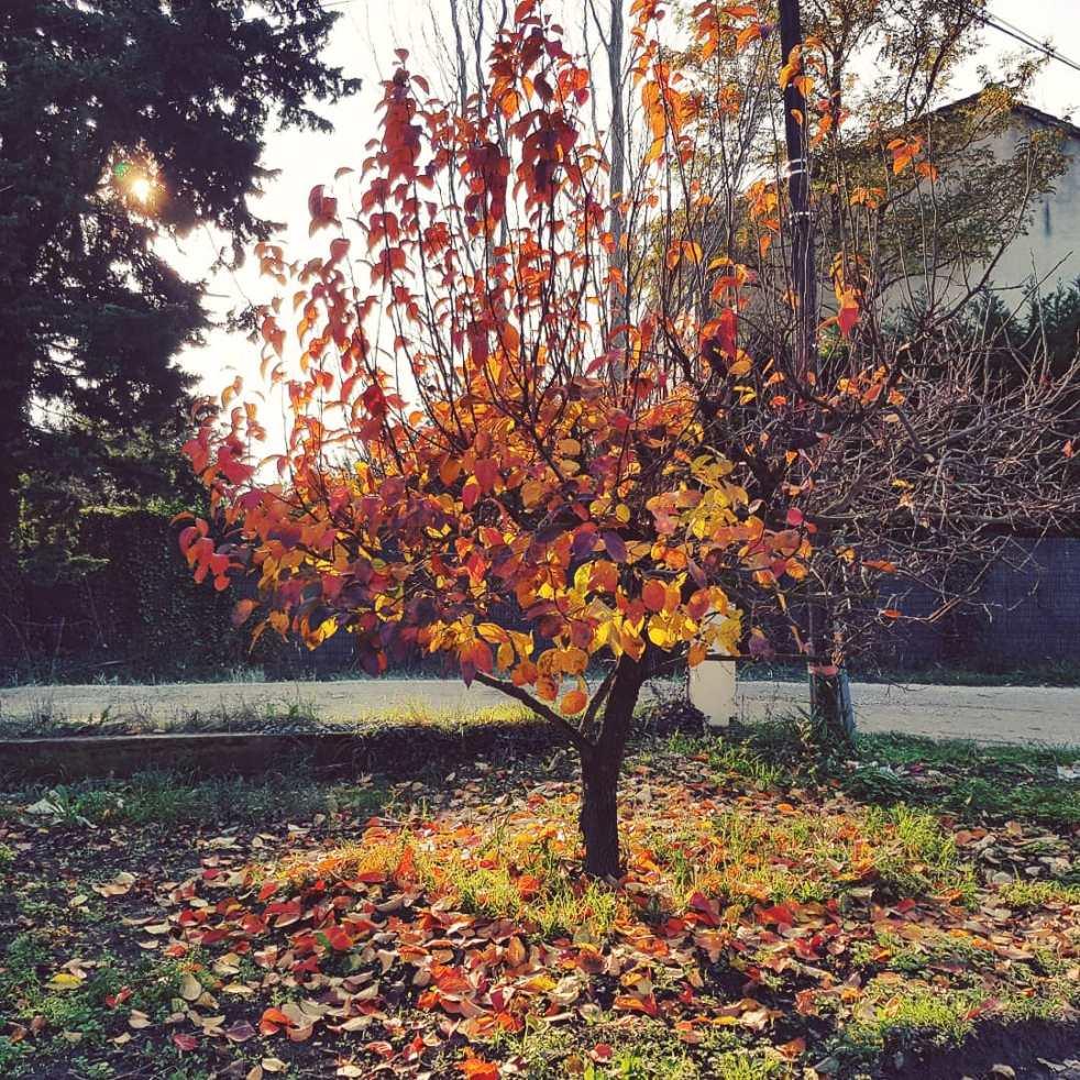 Blog développement personnel pensée positive l'automne ma saison préférée