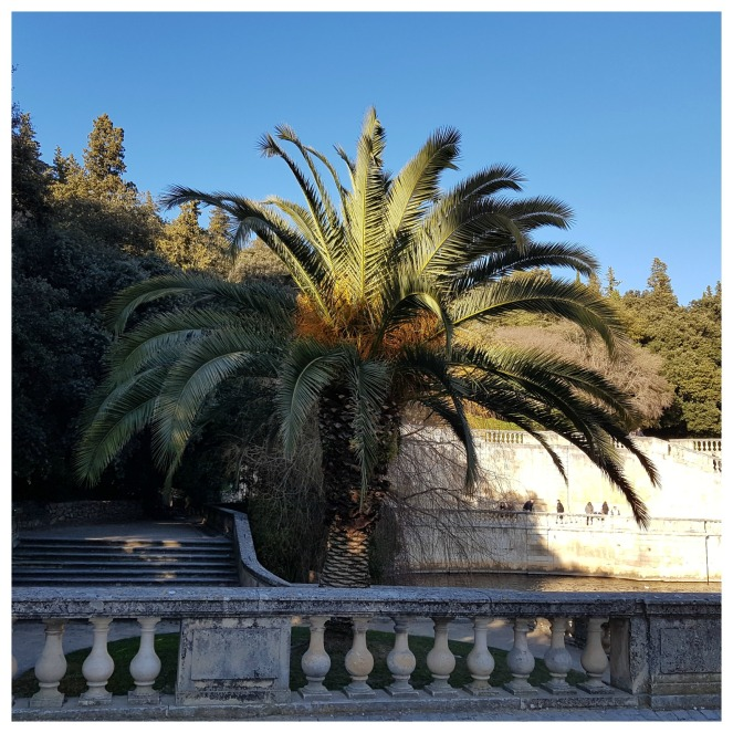 Nîmes Les jardins de la fontaine Palmier Gratitude Journal Count Your Blessings
