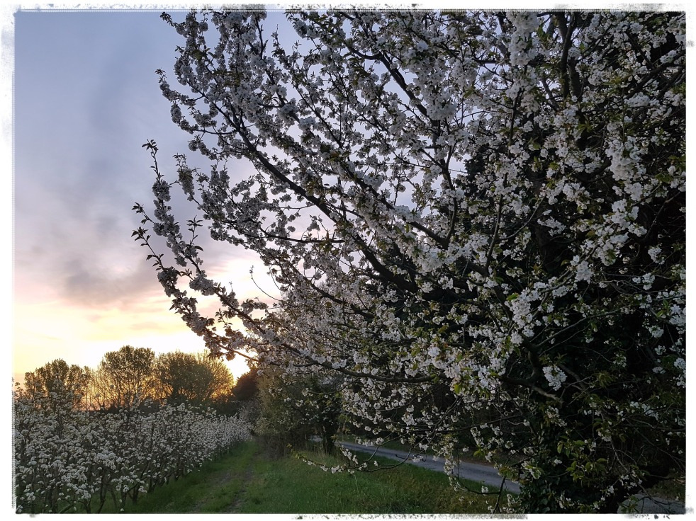 Gratitude Journal Count Your Blessings Appreciate What you Have Orchards Cherry Tree Pear Trees Apprécier ce qu'on a vergers cerisier poiriers printemps spring