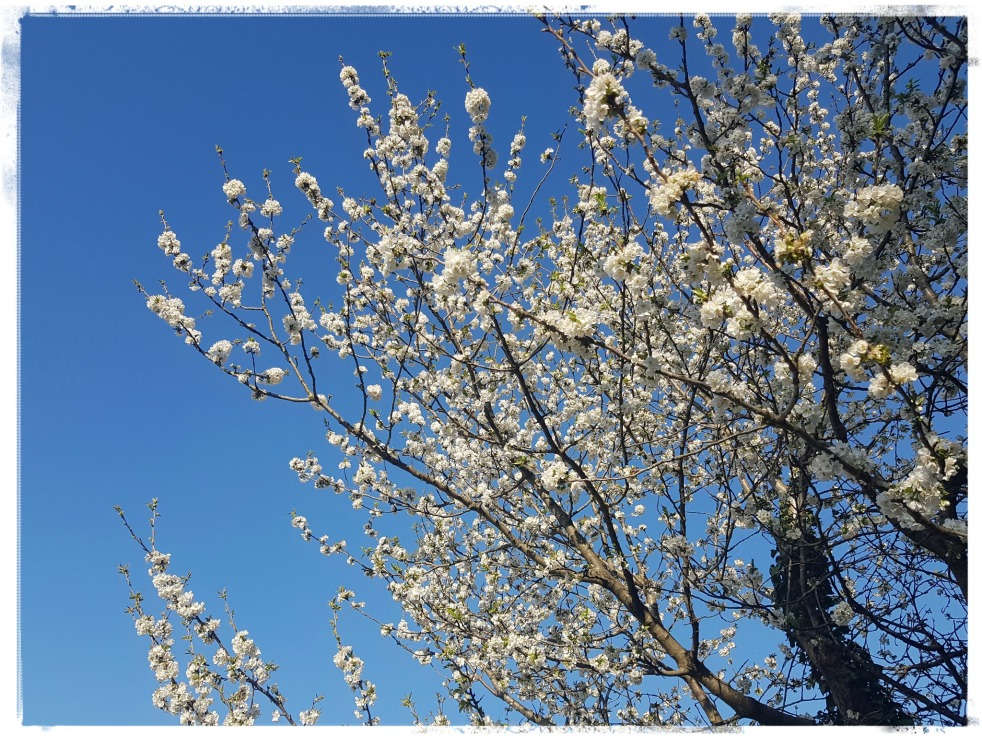 Cerisier Cherry Tree Spring Gratitude Journal Les petits bonheurs Aujourd'hui je m'aime