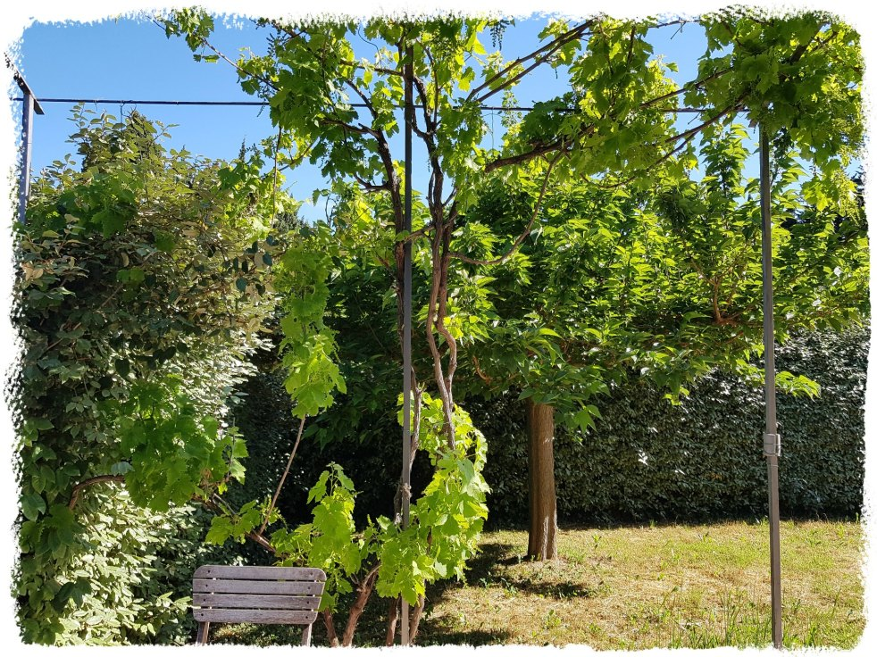 Jardin Provence Gratitude Journal