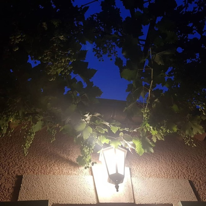 gratitude journal vive les soirées d'été à la fraîche