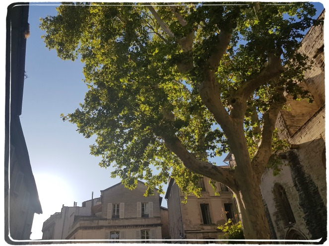 Indian summer in Avignon